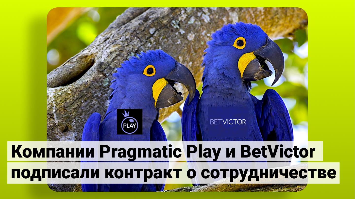 Компании Pragmatic Play и BetVictor подписали контракт о сотрудничестве
